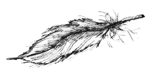 A pen brush drawing of a falling feather.