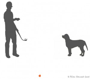 A man looks at his phone while his dog waits for him to throw the ball.