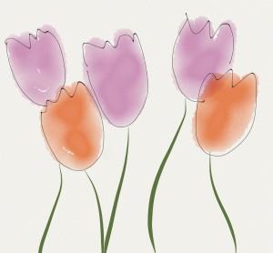Pink and orange tulips
