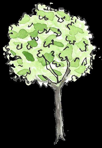 Tree Transparent