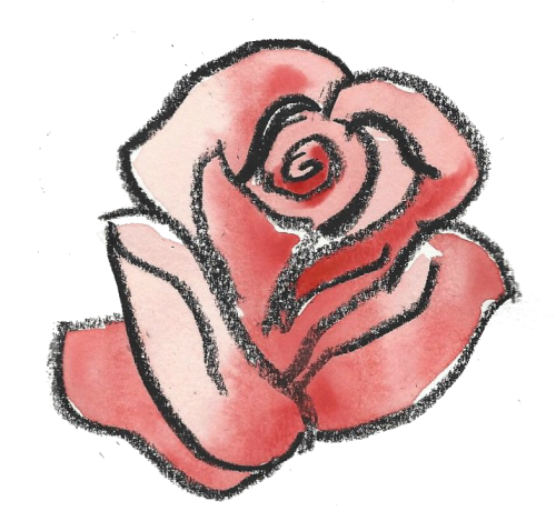 watercolour and crayon drawing of a rose