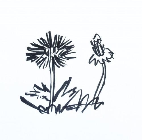 Dandelions. Pentel Brush Pen drawing.