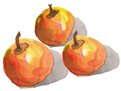 Watercolour apples by Alison Garwood-Jones