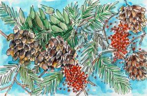 Pinecones and Berries Painting by Alison Garwood-Jones